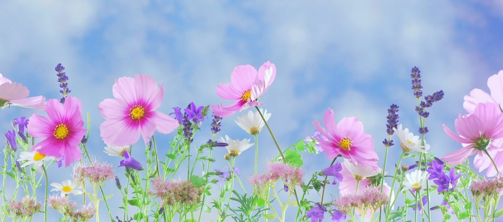 field of wild flowers against a blue sky.