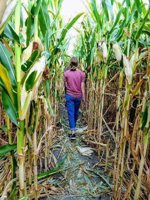 You woman walking through a corn maze