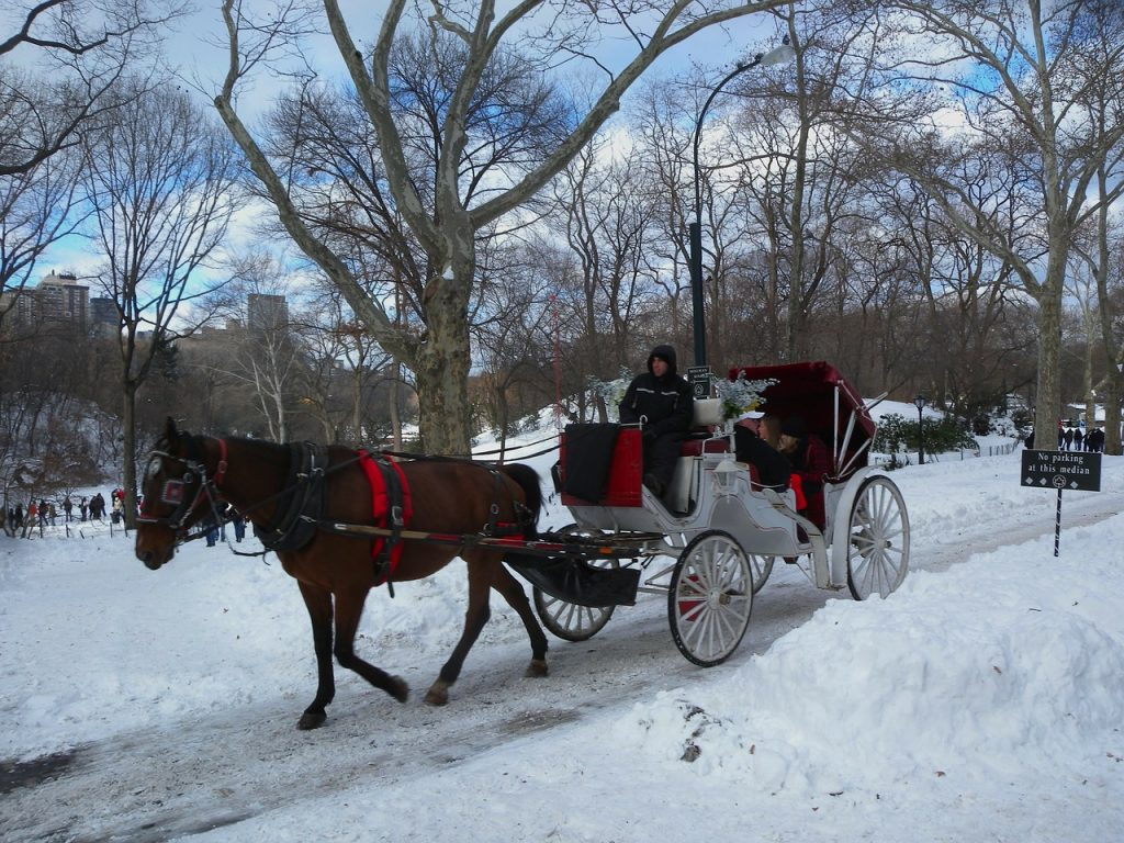 Horse and carriage ride in the snow in central park