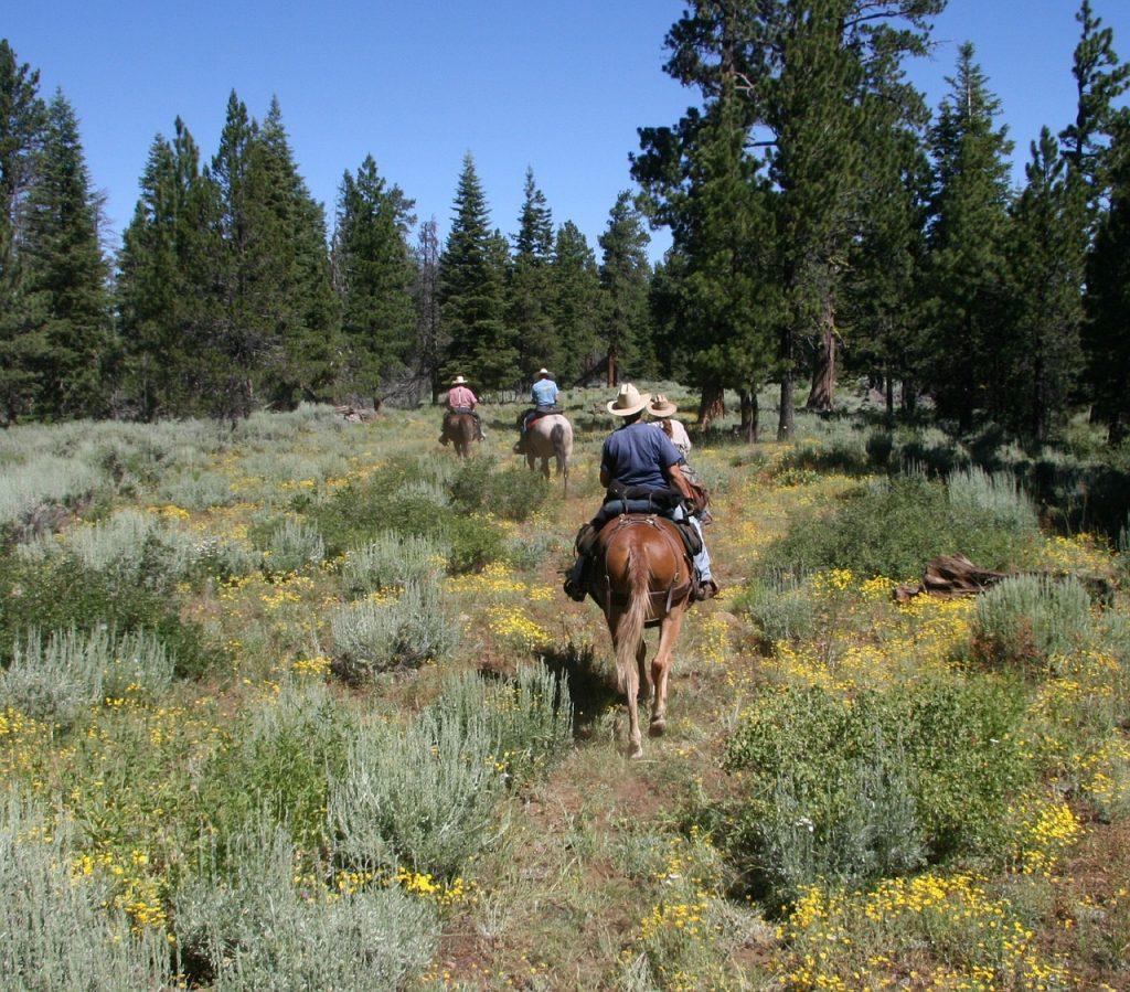 4 people horseback riding in the forest