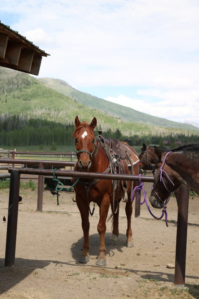 horses at a stable with mountains in the background