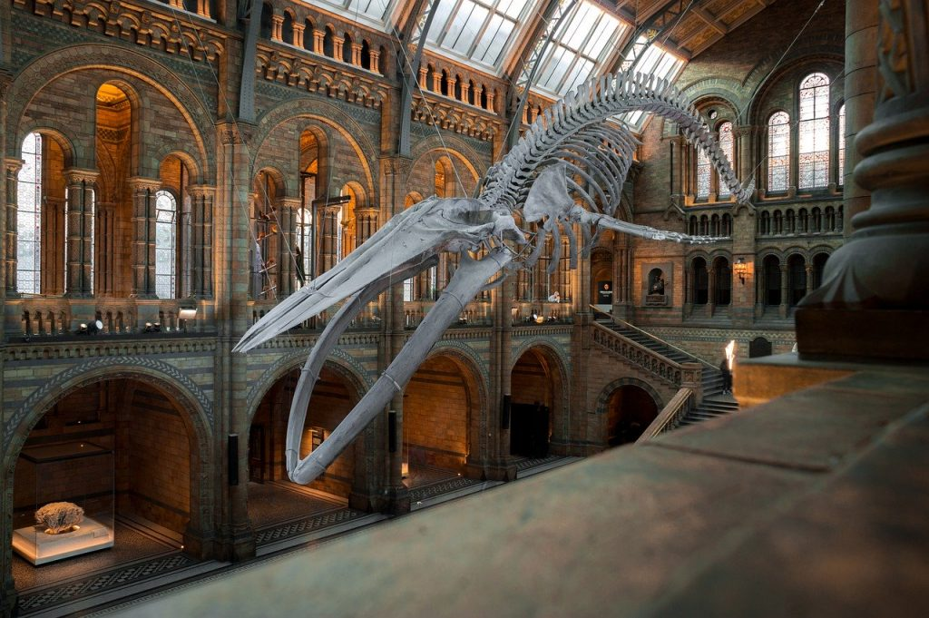 Natural history museum in United Kingdom