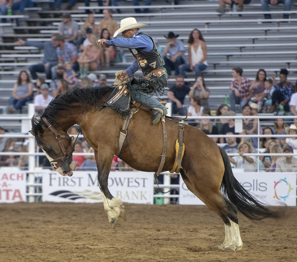 Cowboy on a bucking bronco at an outdoor rodeo.